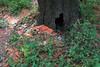 C1_2016-157627 (HamimCHOWDHURY  [Read my profile before you fol) Tags: pink flower nature srinagor hamimchowdhury framebangladesh hijolphool