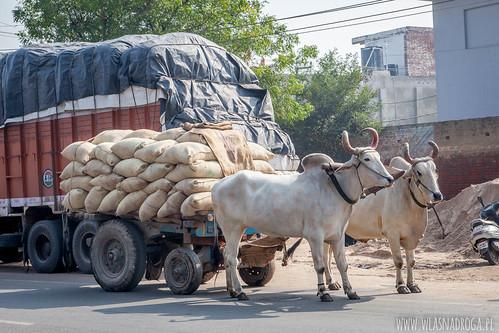 Lokalny transport