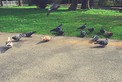 Pigeons (Sareni) Tags: park light colors grass birds vintage spring shadows path pigeons slovenia april slovenija mb maribor citypark twop trava prolece boje 2011 svetlost ptice staza senke golubi sareni mestnipark