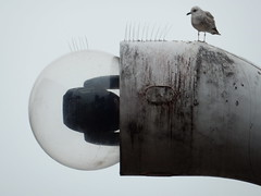 Well lit seagull (deltrems) Tags: street light bird coast town streetlight seagull centre lancashire dirt blackpool spikes brilliance fylde