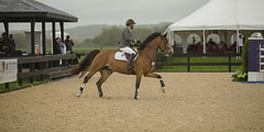 Jumper 2 (William_Doyle) Tags: horses horse cold rain clouds photoshop spring farm north may nj princeton hunter equestrian 2016 skillman topazclarity topazdenoize