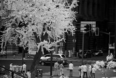 DSC01325 (zkj102) Tags: city tree rain ir 3d cityscape shanghai stereo infrared    htconex
