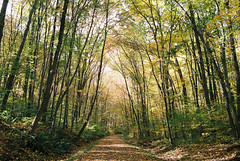 (Doug J.) Tags: new autumn trees england fall film nature colors leaves bike forest 35mm river woods nikon path walk ct rail hike trail 200 vista f3 hop agfa f3hp colorplus