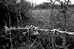 barbed (19andy76) Tags: ripped barbedwire torn