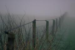 Happy Fenced Friday (MJ Klaver) Tags: mist netherlands fog fence landscape m42 drenthe hek natu carlzeissjena explored oldlens ausjena dren inexplore manualfocuslens zwiggelte fencedfriday happyfencedfriday carlzeissjenasonnar135mmf35mcred