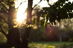 Sunset in the Garden (praetorius.moritz) Tags: sunset sun blur forest garden 50mm nikon warmth depth