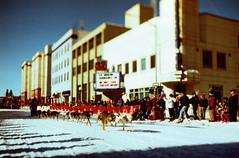 Porst SP Fairbanks Sled Dog Race 4 () Tags: winter dog snow alaska race fur sale sled fairbanks trapper 2014