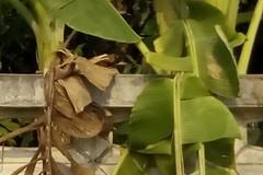 crop_1