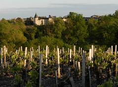 "Vignoble (Daniel Biays "" VOIR MON PROFIL "") Tags: vignes vignoble saintestphe gironde chteaulafiterothschild mdoc pauillac"