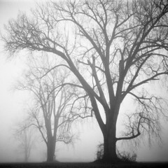 Foggy Morning (scott_z28) Tags: statepark trees winter blackandwhite bw mist abstract 120 6x6 tlr film nature monochrome fog mi forest michigan surreal 150 epson v600 rodinal ilford yashica baycity panf 635 tricities