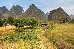 Limestone landscape (Bridgetony) Tags: china asia southeastasia guilin yangshuo limestone peaks karst guanxi asiapacific