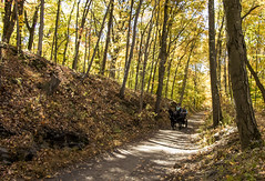 Horses in the woods (photosbydylank) Tags: horses nature animals leaf carriage path transporation