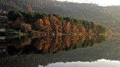 Natural mirror (CarlaFrancisco) Tags: winter reflection tree folhas portugal water leaves rio gua espelho canon river eos mirror photo flickr foto fallcolors foliage photograph fotografia dslr inverno reflexion rvore reflexo cf fallcolours viseu autofocus northernhemisphere folhagem efs1785mm efs1785 canonefs1785mmf456isusm 40d penalvadocastelo coresdeoutono canoneos40d canon40d digitalsinglelensreflex carlafrancisco takenindecember riodo hemisfrionorte infinitexposure takenin2015 copyright2015carlafranciscoallrightsreserved