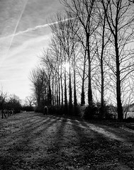 Winter Sun (Ian Hayhurst) Tags: poplar row figure lone fujifilm backlit xf14mmf28r