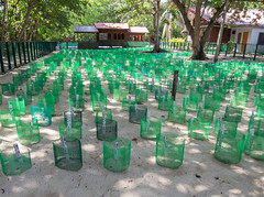 Turtle Hatchery (m_c2012) Tags: malaysia borneo sabah turtleisland selinganisland