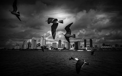 come fly with me, lets fly, lets fly away (efrainsalvadorjr) Tags: california blackandwhite zeiss sandiego 28mm ad sandiegoskyline carlzeiss biogon sandiegoharbor sonyalpha a7r biogon28mm blackandwhitepics mflens sandiegoferry sonya7r