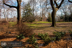 Central Park (BillyAB) Tags: park nyc newyorkcity winter usa holiday ny newyork cold america centralpark manhattan central february newyorknewyork