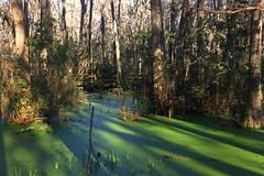 IMG_7378 (SweetMeow) Tags: forest shadows southcarolina boardwalk marsh conservancy hiltonheadplantation whoopingcranepondconservancy