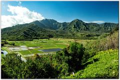 Taro Fields of Hanalei. (mlibbe) Tags: sky clouds landscape hawaii farm kauai taro hanaleibay wwwmichaellibbephotographycom
