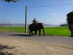 Easy rider to Dalat347