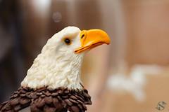 023:365 - 02/08/2016 - Eagle (Shardayyy) Tags: bird field animal nikon eagle potd depthoffield photoaday 365 depth project365 365project d700 shardayyyphotography shardayyyyphotographycom