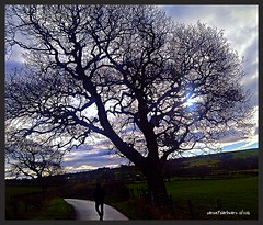 """You'll Never Walk Alone"" 2016_01_02 (caren (Thanks for 1 Million+ views)) Tags: tree wales landscape unitedkingdom walk cymru ceredigion midwales youneverwalkalone"
