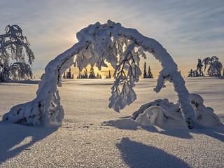 Snow Arch