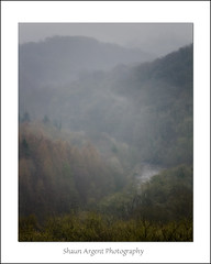 The View (shaun.argent) Tags: morning trees winter mist tree nature forest woodland woods hackfall shaunargent