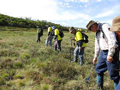 Surveys (Environment + Heritage NSW) Tags: weed volunteers volunteer kosciuszko kosciuszkonationalpark orangehawkweed noxiousweed volunteerprogram weedcontrol orangehawkweedcontrolprogram weedprogram