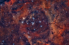 Rosette Nebula (Caldwell 49) (cassianocarromeu) Tags: red sky colors beautiful night canon stars object space cluster deep telescope 49 nebula astrophotography astronomy hd universe rosette celestron caldwell 8in halpha pixinsight backyardeos