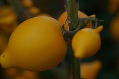DSC04094 (oliveplum) Tags: fruit singapore bokeh sony marinabay gardensbythebay leica60f28macro