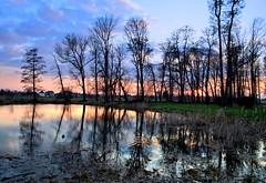 Evening in the park (Tobi_2008) Tags: park trees reflection water germany deutschland pond wasser saxony arbres sachsen teich bume allemagne spiegelung supershot platinumheartaward