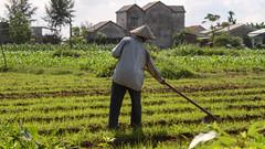 Vietnam - Hoi An (DDally001) Tags: vietnam farmer ricefields bicycledaytrip
