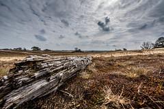 Kootwijkerzand (Davy Sleijster) Tags: sky tree nikon gelderland kootwijkerzand kootwijk staatsbosbeheer 1424 nikond750