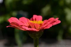 moments of summer (Sandra Kirly Pictures) Tags: flowers outdoor poland krakw cracow botanicalgarden ogrdbotaniczny