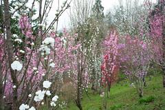 20160403-DSC_5718.jpg (d3_plus) Tags: sky plant flower macro nature rain japan walking nikon scenery waterdrop bokeh hiking drop daily rainy bloom  28105mmf3545d nikkor  wildflower  kanagawa   aftertherain dailyphoto   thesedays sagamihara 28105   dogtoothviolet   28105mm     zoomlense shiroyama    erythroniumjaponicum    28105mmf3545 d700 281053545  nikond700 aiafzoomnikkor28105mmf3545d  28105mmf3545af dogtoothvioletvillage aiafnikkor28105mmf3545d