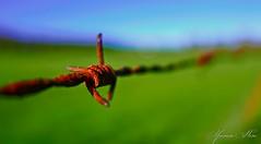 I whish you a nice day (YᗩSᗰIᘉᗴ HᗴᘉS +6 500 000 thx❀) Tags: blue macro green lumix europa flickr belgium ngc fil twist vert bleu campagne namur hens rouille yasmine wallonie tordu rouillé niceday iamflickr flickrunitedaward hensyasmine