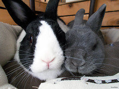 Chicca e Cleo (.* Snowflakes *.) Tags: bunny love e cleo chicca coniglio
