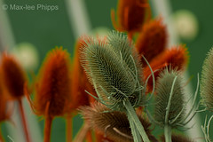 Macro Flower (Max Phipps Photography) Tags: plants flower detail macro closeup colourful redring