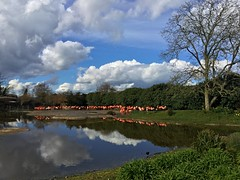 2016-03-30 15.52.46L (Lozarithm) Tags: reflections landscape flamingos hdr wwt slimbridge ipad