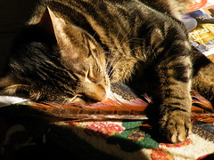 Played out (rospix+) Tags: uk sleeping nature wales cat sleep tabby feather april tabbycat 2016 rospix
