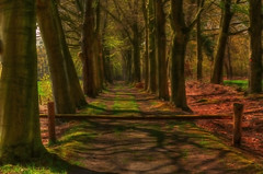 The forest._01 (alex.vangroningen) Tags: trees green leaves forest fence platinumheartaward daarklands