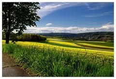 20160424-164259 (lichtschattenjaeger) Tags: yellow landscape gold diesel bio eifel gelb raps biodiesel vulkan getreide gerste weizen benzin hafer biosprit