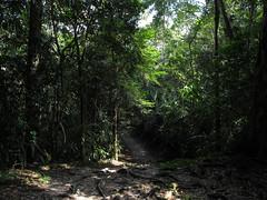 "Tikal <a style=""margin-left:10px; font-size:0.8em;"" href=""http://www.flickr.com/photos/127723101@N04/26172233261/"" target=""_blank"">@flickr</a>"