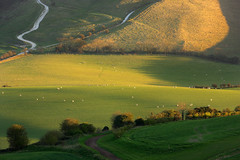 Return to the Fold (Alan MacKenzie) Tags: sunset landscape sussex nationalpark shadows sheep fields southdowns
