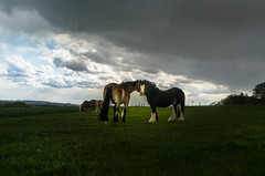 Magical Moment (neerod81) Tags: horses nature grass clouds outdoor dramatic surreal magical pferde stormyweather naturalcolors crazylight skydrama qualitycouldbebetterimsorry