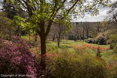 IMGP1137 (acornuser) Tags: park trees blackandwhite bw reflection water woodland garden landscape waterfall spring surrey cascade virginiawater blosom sigma1770 pentaxk3