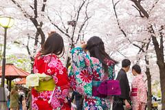 Selfie Kimono Girls (kimtetsu) Tags: people girl japan spring kyoto jp   cherryblossom   kimono gion   selfie
