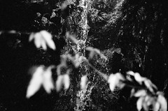 Falling Water (Alan P. in Hong Kong) Tags: life city blackandwhite bw monochrome hongkong hike trail analogue ilfordxp2 filmphotography zenit122