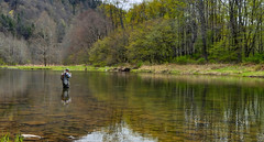 glass (W. Robin Hill) Tags: brown fly fishing trout catchandrelease